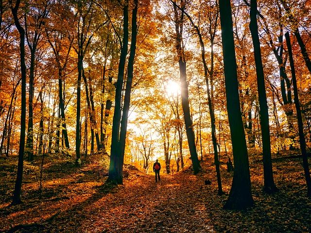autumn-1812180_640