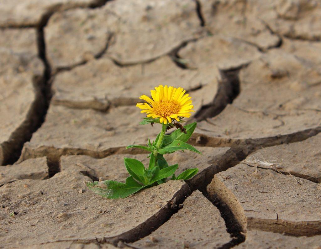 fiore tra la roccia - resilienza